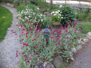 self-sowing annuals